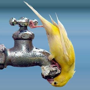 how we can save water essay